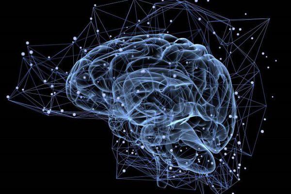 struktur dan kinerja otak